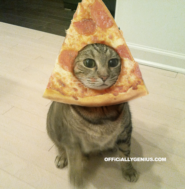 official genius pizza cat